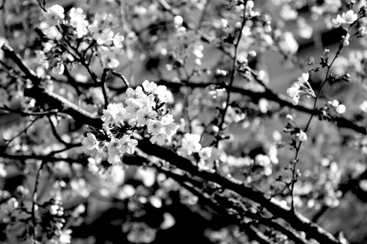 160404_Nikon 008_black.jpg